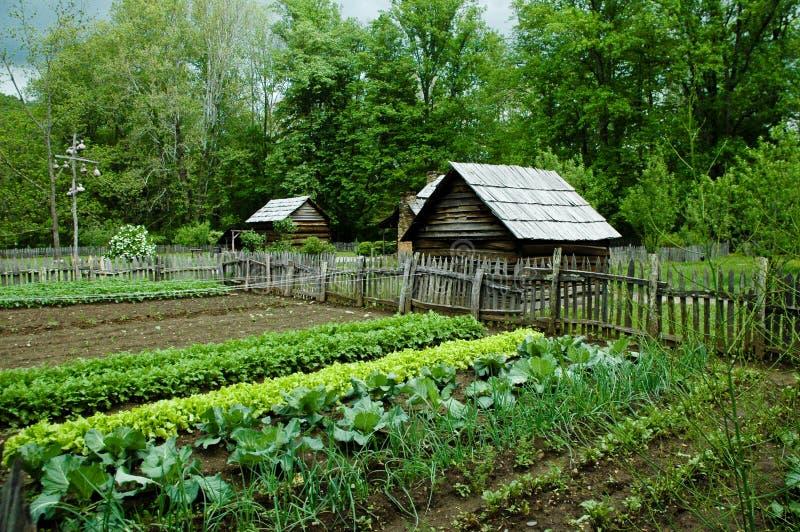 Jardim vegetal imagens de stock