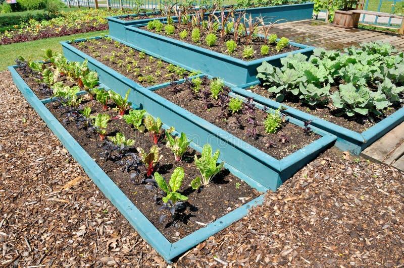 Jardim vegetal fotografia de stock