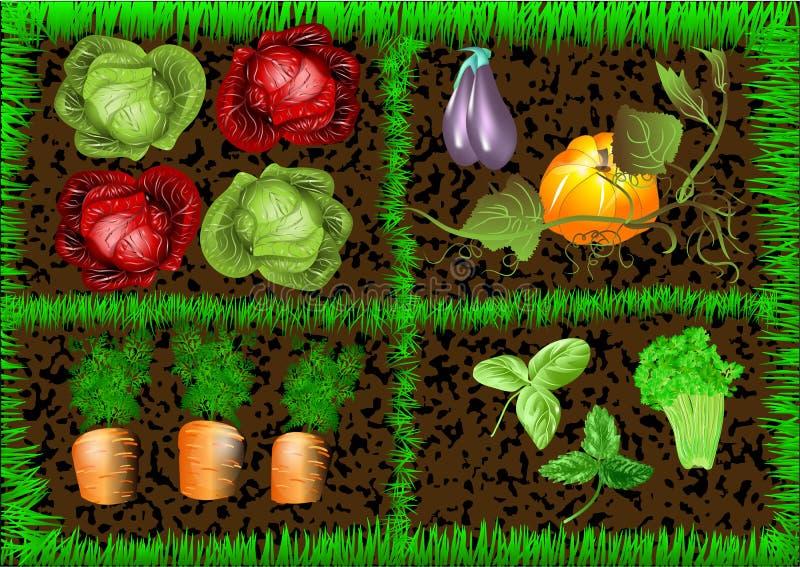 Jardim vegetal ilustração do vetor