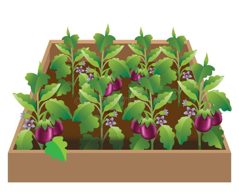 Jardim vegetal com beringela cultivada, plantas do brinjal Todas as plantas estão carregando brinjals maduros, frescos - vetor ilustração do vetor