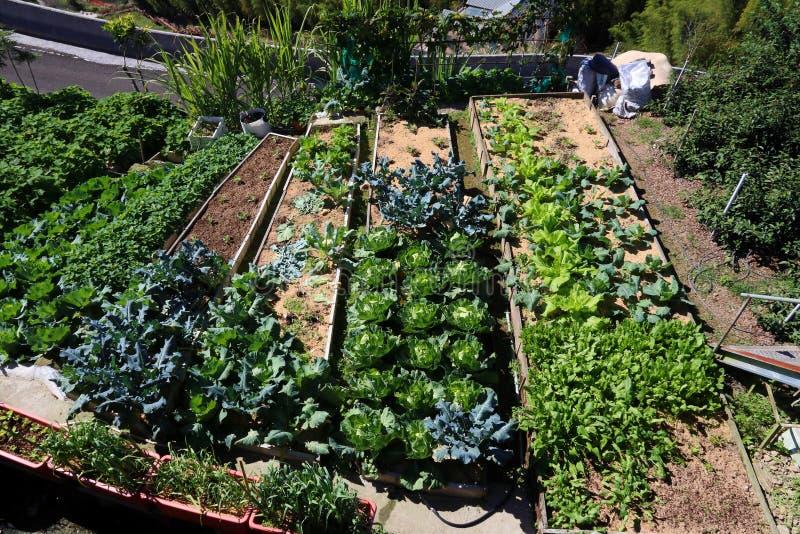 Jardim vegetal local imagem de stock