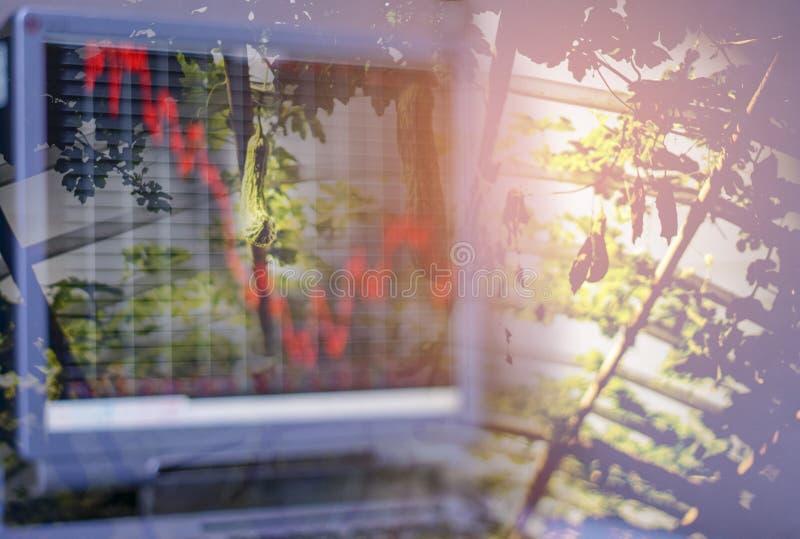 Jardim vegetal orgânico, e luz na manhã em um sistema de exploração agrícola fechado Não-tóxico e em um tela de computador que mo foto de stock