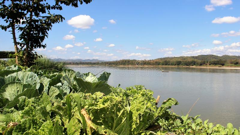 Jardim vegetal pelo lado do rio foto de stock