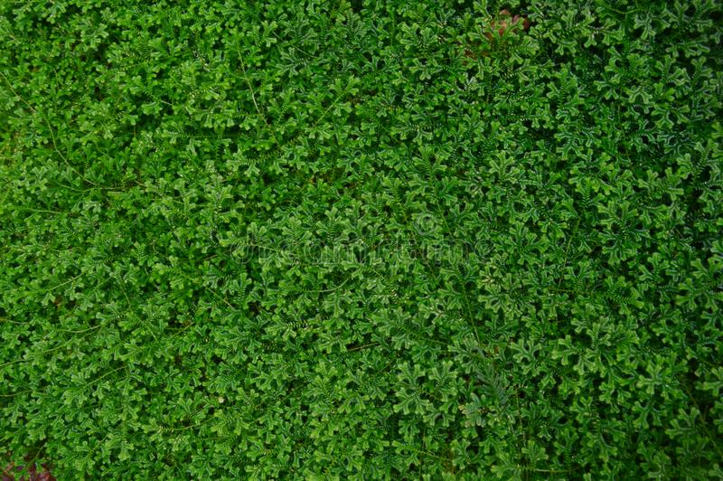 Jardim verde da licença foto de stock