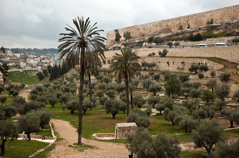 Jardim verde-oliva no Jerusalém, Israel fotos de stock