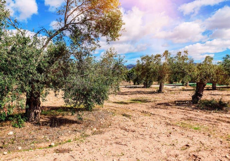 Jardim verde-oliva sob o céu azul imagens de stock royalty free