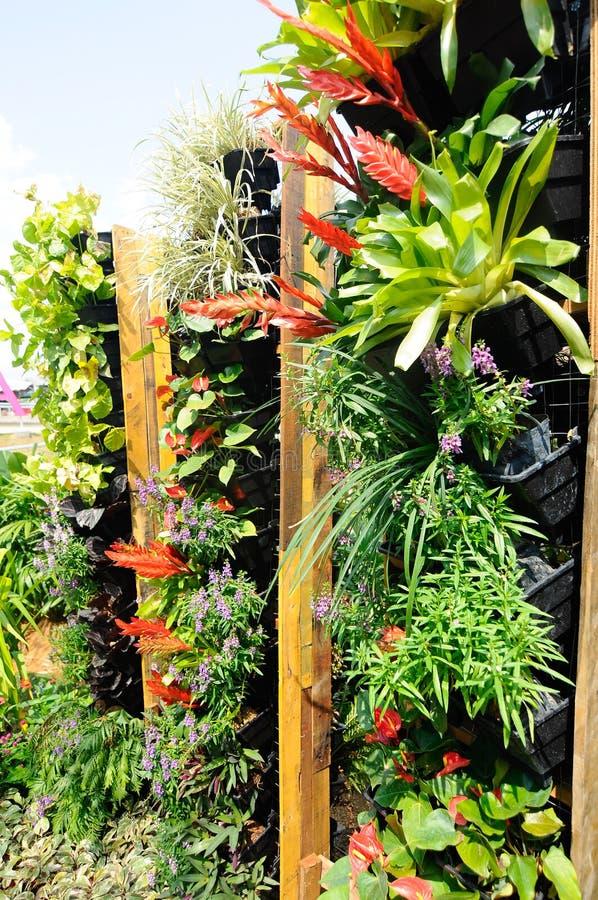 Jardim vertical foto de stock