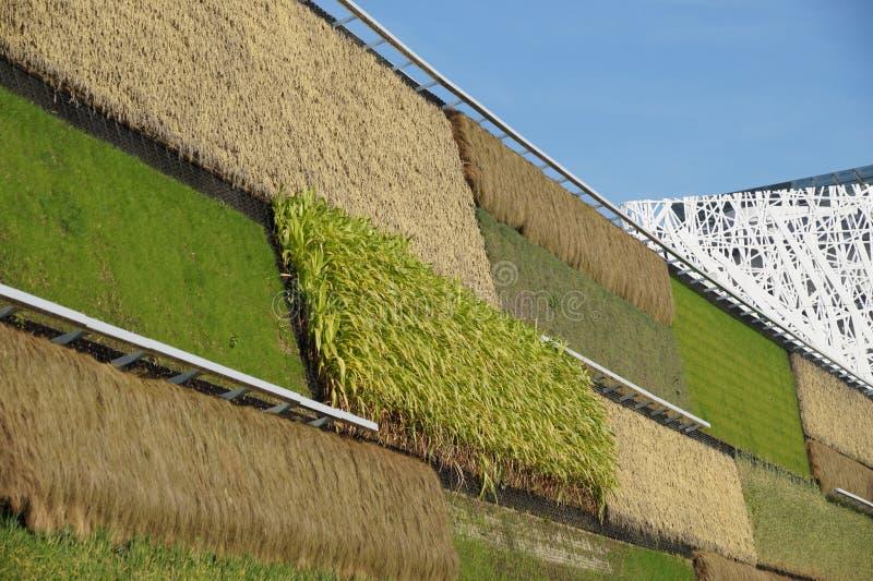 Jardim vertical dos vegetais hidropônicos orgânicos para o agricolture moderno imagens de stock
