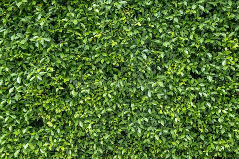 Jardim vertical verde imagens de stock royalty free
