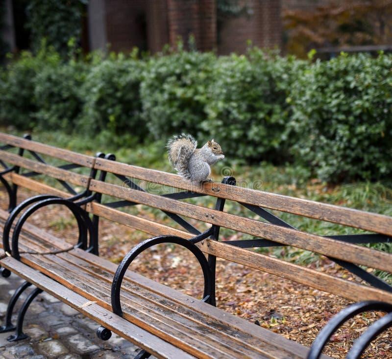 Jardim zoológico bonito do parque do esquilo no centro foto de stock