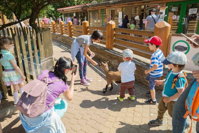Jardim zoológico, cabras e crianças de trocas de carícias foto de stock
