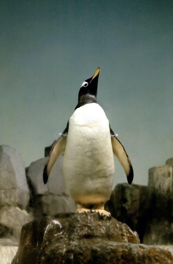 Jardim zoológico de New York do pinguim fotos de stock