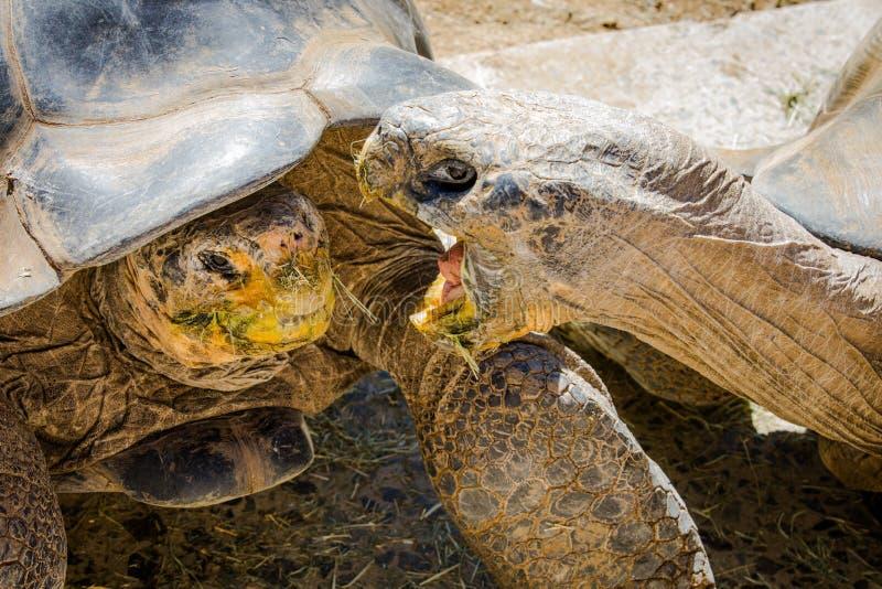 Jardim zoológico de San Diego imagens de stock
