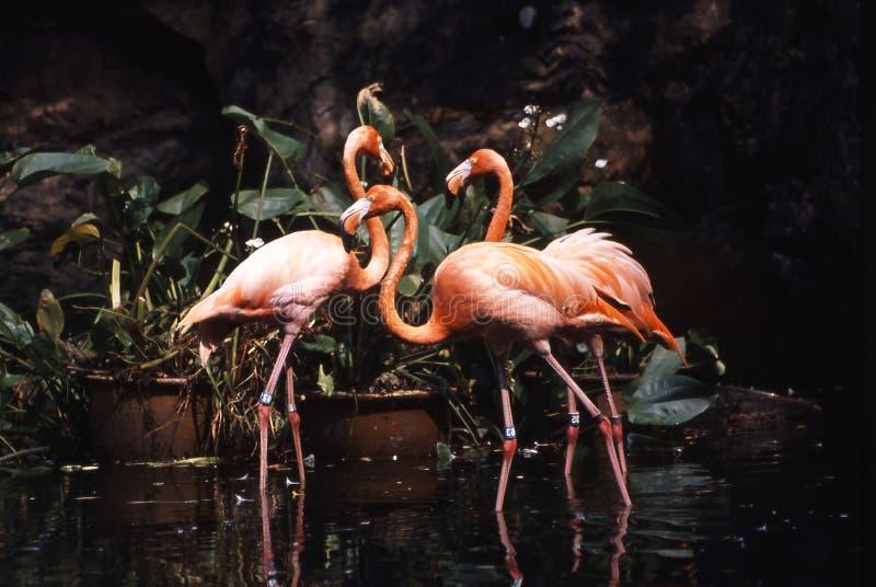 Jardim zoológico de Singapura fotografia de stock royalty free