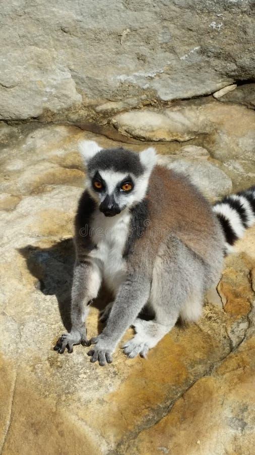 Jardim zoológico de Sydney fotos de stock