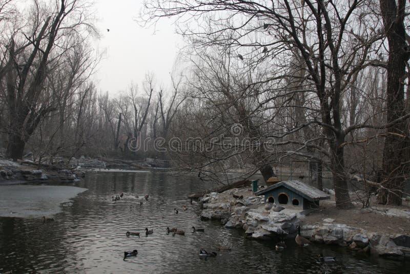 Jardim zoológico do Pequim, China fotos de stock