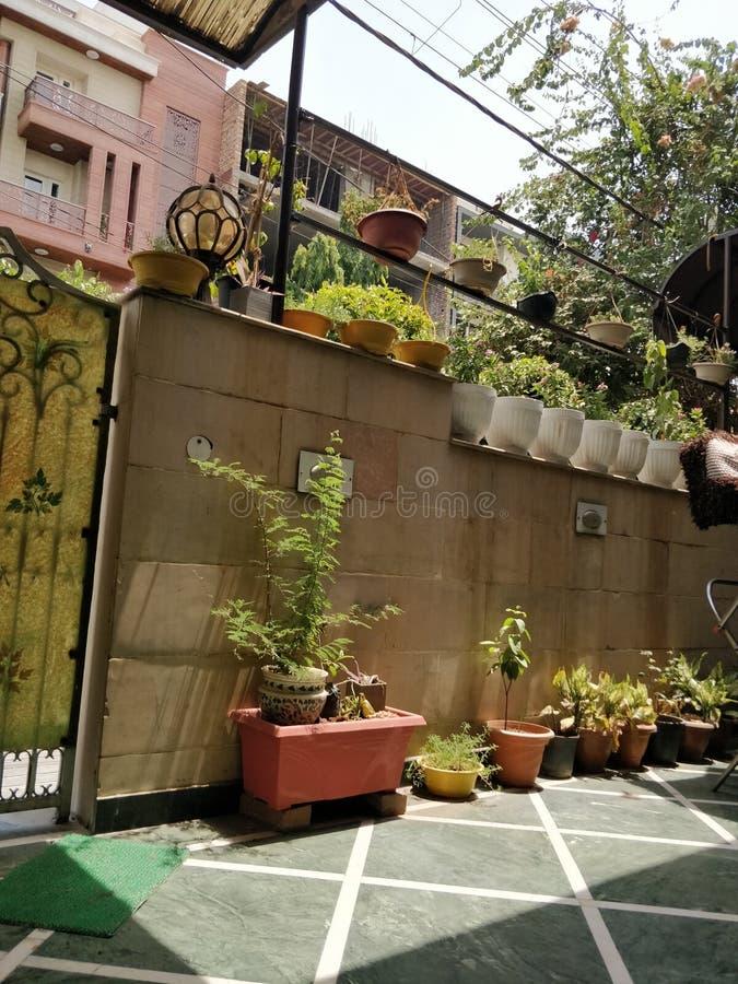 Jardin à la maison d'usine de lumière du soleil photographie stock