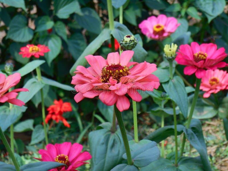 Jardin étonnant photographie stock