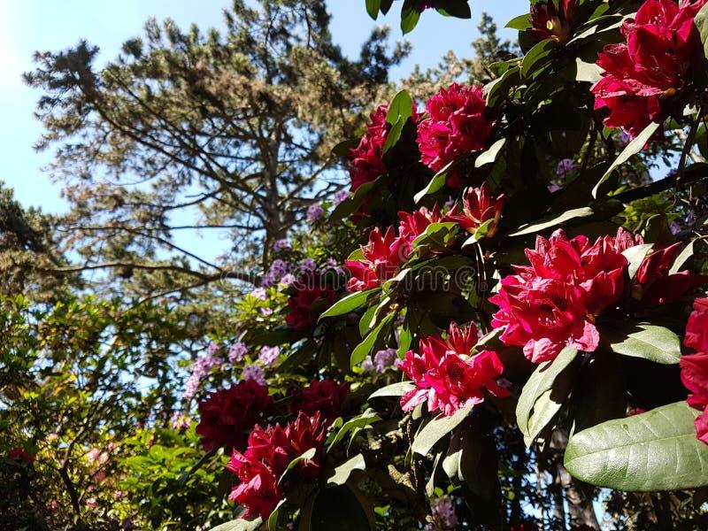 Jardin стоковое фото rf