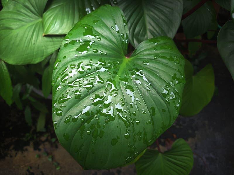 Jardin après la pluie photos libres de droits