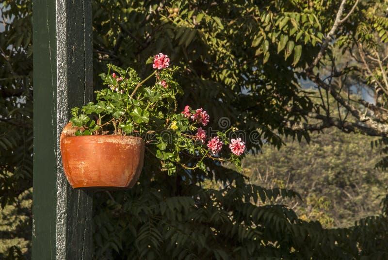Jardin avec des fleurs photographie stock