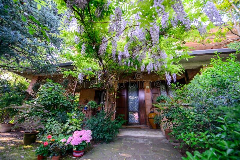 Jardin avec des fleurs de glycine photos libres de droits