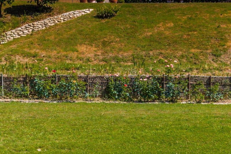 jardin avec des rangées des roses photographie stock