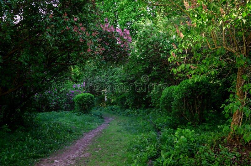 Download Jardin Avec Du Charme De Ressort Photo stock - Image du conte, ressort: 77150862
