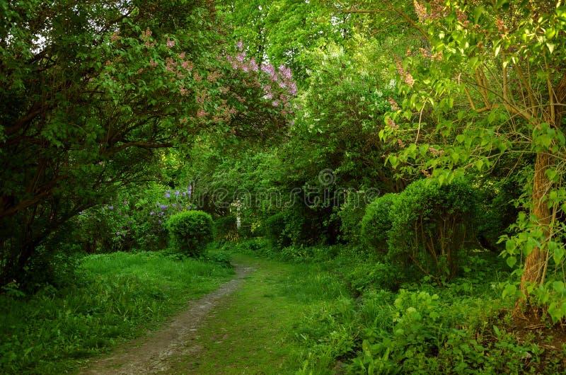 Download Jardin Avec Du Charme De Ressort Photo stock - Image du nature, végétation: 77158778
