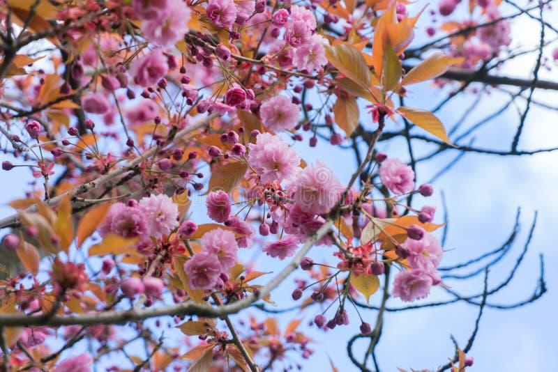 Jardin avec l'arbre de magnolia image stock