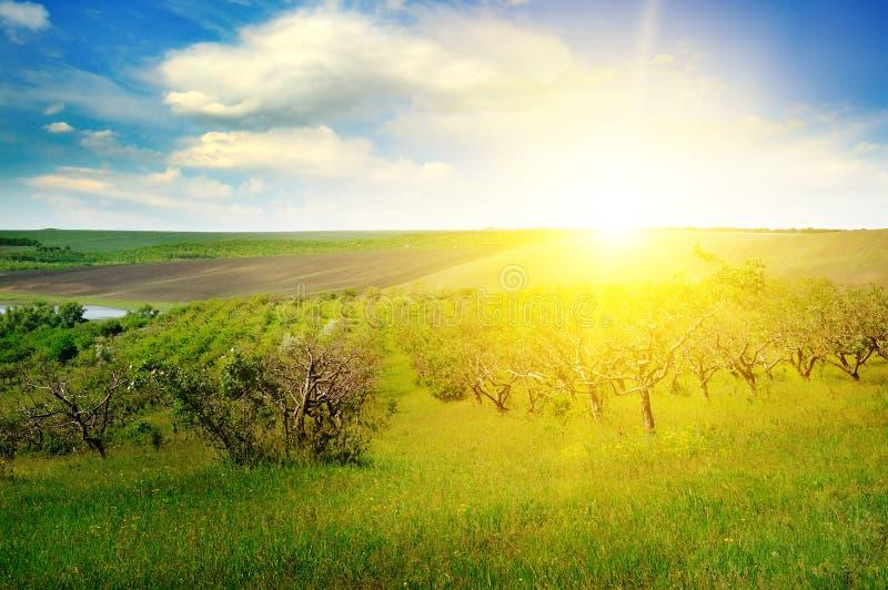 Jardin avec les arbres fruitiers et le lever de soleil image libre de droits