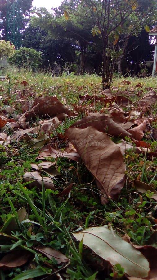 Jardin beau photo libre de droits
