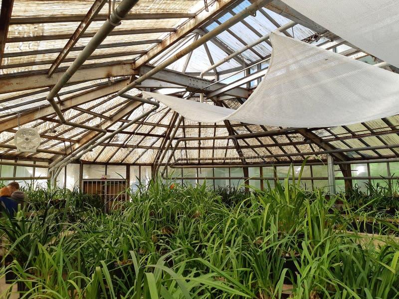 Jardin botanique à Moscou photos libres de droits