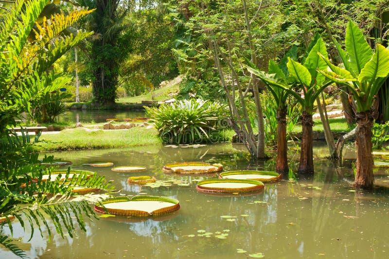 Jardin botanique dans le Rio de Janeiro photographie stock