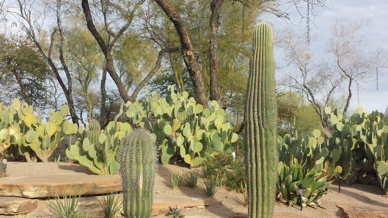 Jardin botanique de Las Vegas image libre de droits