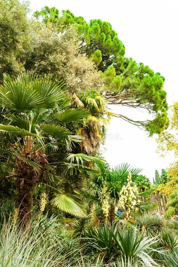 Jardin botanique de Nikitsky V?g?tation ?paisse luxuriante de vieux beau parc vert avec diff?rents arbres, usines et d?coratif image libre de droits