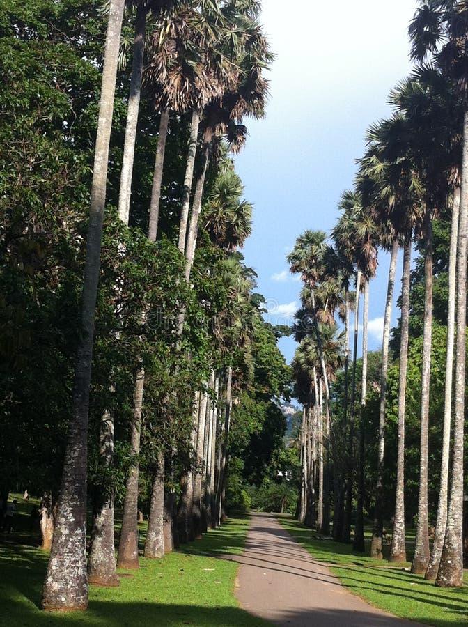 Jardin botanique de Peradeniya image libre de droits