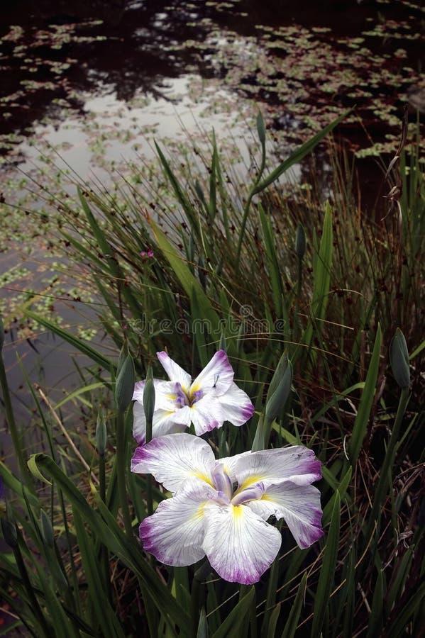 Jardin botanique de San Francisco images libres de droits