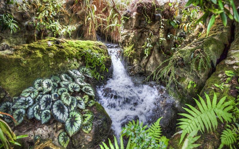 Jardin botanique de Singapure photo stock