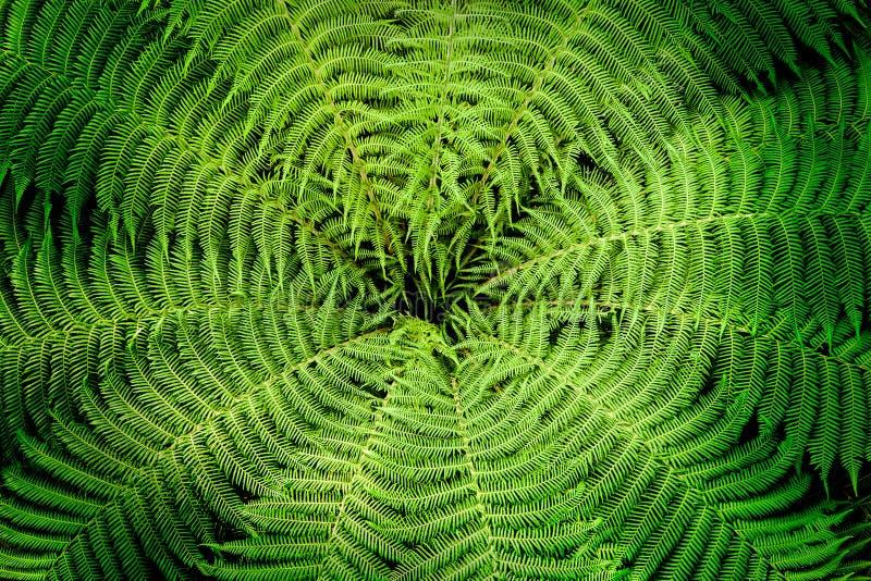Jardin botanique intérieur de Singapour de bel affichage de fougère photographie stock libre de droits