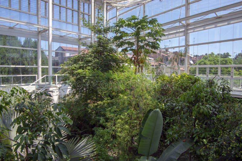 Jardin botanique Padoue/ITALIE - 16 juin 2018 : Arbres, arbustes et usines tropicaux stupéfiants de verdure avec les feuilles ver photo stock