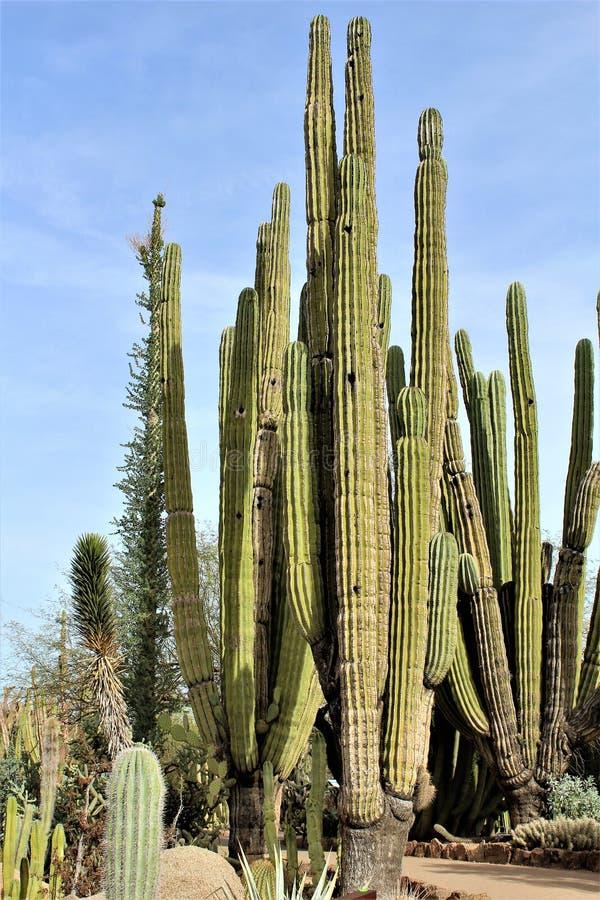 Jardin botanique Phoenix, Arizona, Etats-Unis de désert photographie stock libre de droits