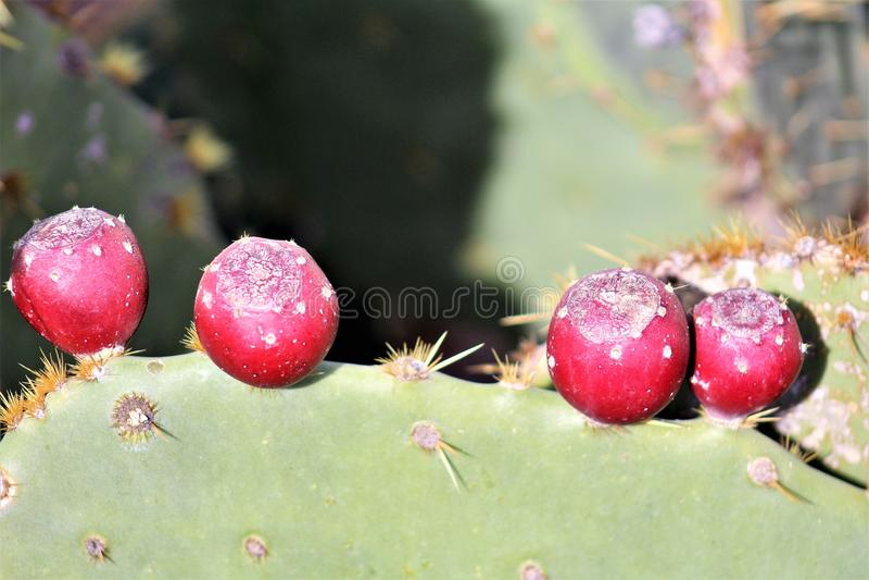 Jardin botanique Phoenix, Arizona, Etats-Unis de désert photo stock
