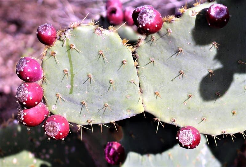 Jardin botanique Phoenix, Arizona, Etats-Unis de désert images stock