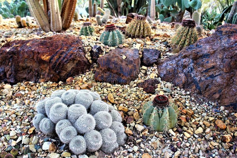 Jardin botanique Phoenix, Arizona, Etats-Unis de désert photos stock
