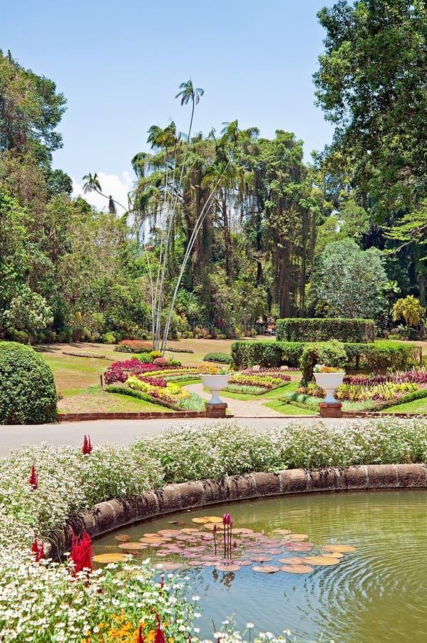 Jardin botanique royal de Sri Lanka image stock