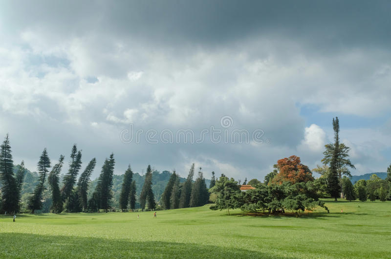 Jardin botanique royal Peradeniya photo stock