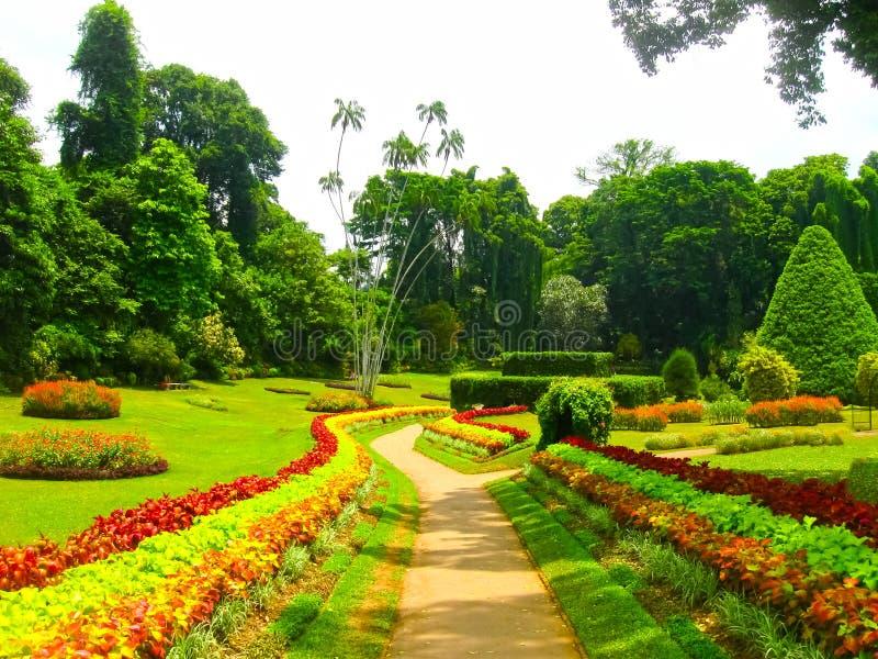 Jardin botanique royal Peradeniya Le Sri Lanka images libres de droits