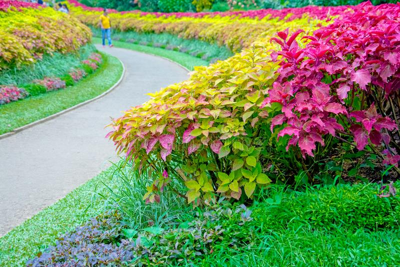 Jardin botanique royal Peradeniya, Sri Lanka photographie stock