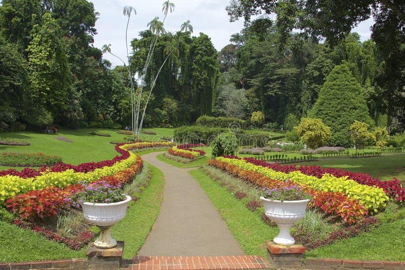 Jardin botanique royal Peradeniya, Sri Lanka photos stock